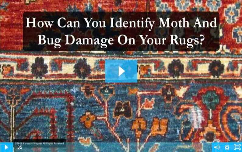 RugVideos Moth And Bug Identification